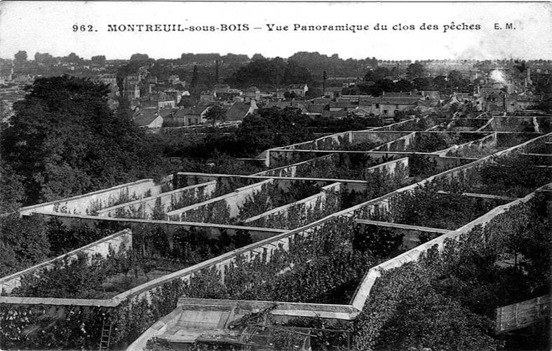 carte postale | Vue Panoramique du clos des pêches |<b><a href='http://www.montreuil.fr/environnement/les-murs-a-peches/' target='_blank' >site officiel des murs à pêches de la mairie de Montreul</a></b>|<b><a href='http://www.montreuil.fr/fileadmin/user_upload/Files/Environnement/murs_a_peches/banlieuepaysanne_dos50.pdf' target='_blank' >dossier sur le banlieu paysanne</a></b>